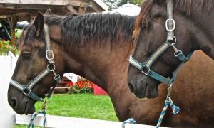 HDA + Achitecte chevaux